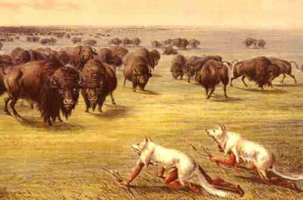 american great plains animals - photo #43